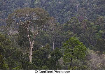 Hala-bala (Malayan Type Rainforest) landscape view