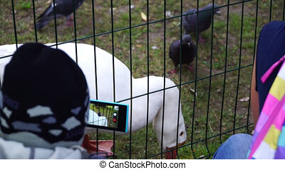 Boy shoots video geese on a smartphone in the park
