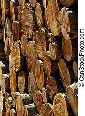Stack of Logs Pine Trees - Stack of pine logs in fire pile...