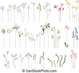 Collection of different stylized flowers and forest herbs