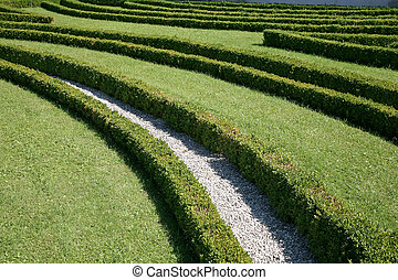 Boxwood hedge in a park