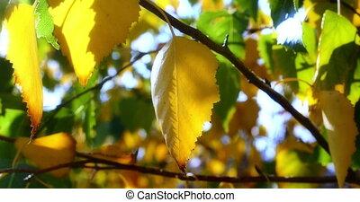 autumn leaves in tree sun light 4k