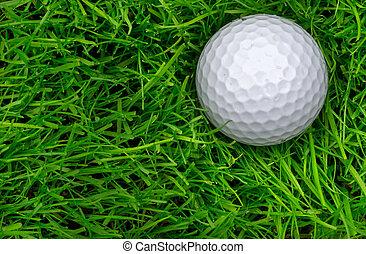 Single Golf Ball Laying in Semi Rough - Overhead macro close...