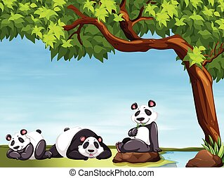 Pandas sitting under the tree