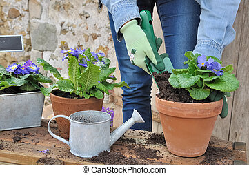 potting flowers - woman potting flowers outdoor