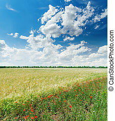 white clouds in blue sky over green field with red poppies