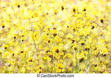 Yellow flowers field - Golden flower field with Brilliantly...