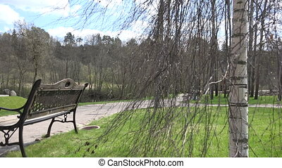 birch branch swing wind