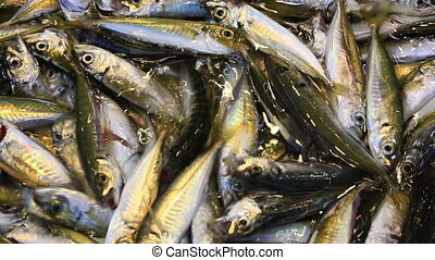 Fresh catch of shiny sardine on fish market - Close up view...
