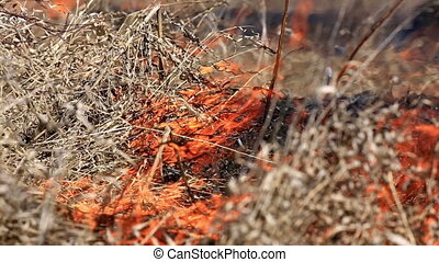 Forest fire: dry grass burning to ashes - Close up view at...