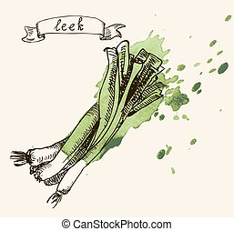 hand drawn vintage illustration of leek - Vector watercolor...