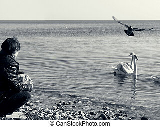Alone with the sea birds - A young boy feeding swans on the...