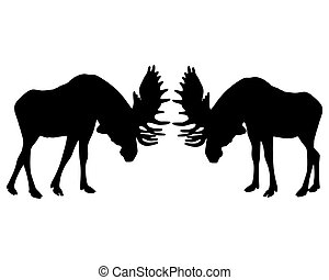 Isolated illustration of rutting behavior of moose