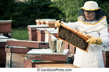 Beekeeper 2 - Beekeeper woman working with a frame full of...