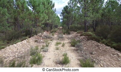 Old track between pine tree forest - Wide angle view of old...