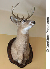Deer head with antlers on the wall