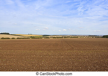 chalky plowed soil - newly cultivated chalky soil in a...