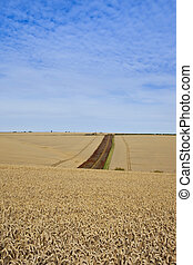 yorkshire wolds wheat production - an old disused farm on a...