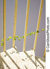 Steel stairs - Steel spiral staircase with wild grape plant...
