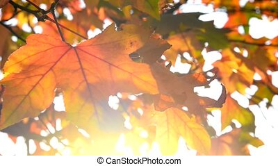 Autumnal leaves as background with sunshine