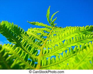 close up fern
