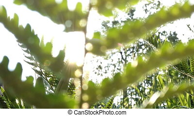 fern blowing in the wind with sun - close up of fern blowing...