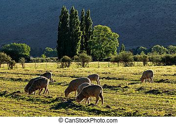 Rural farm landscape