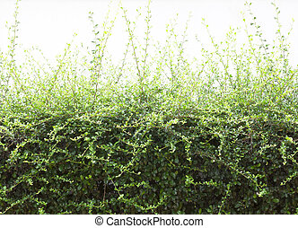 Trees bushes natural trees form a green background.