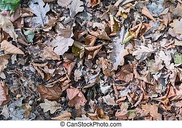Blätter, Herbst