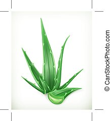 Aloe vector icon - Aloe, vector icon, isolated on white...