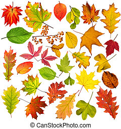 Colorful autumnal leaves collection, close-up.