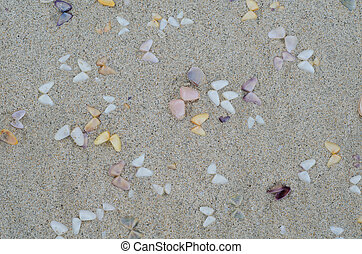 Wet beach sand with seashells background