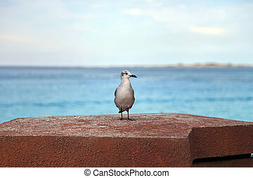 Seagull standing on a pier rock