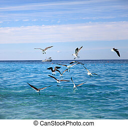 Seagulls feeding on the water surface