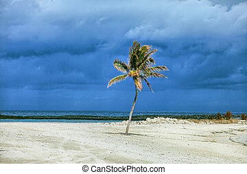 Sunlit palm tree with stormy clouds in the background....