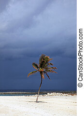Sunlit palm tree with stormy clouds in the background...
