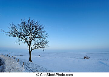 winter landscape in the Netherlands - Beautiful winter...
