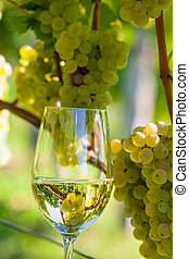wineglass in vineyard - wineglass with wine in the vineyard...