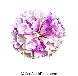 Beautiful bouquet flower isolated - Beautiful bouquet...
