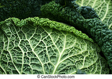 Savoy cabbage Textured leaf Natural green background