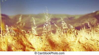 grass in meadow 4k