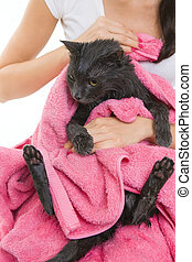 Cute soggy Cat after Bath - Woman Holding Cute Soggy Cat...