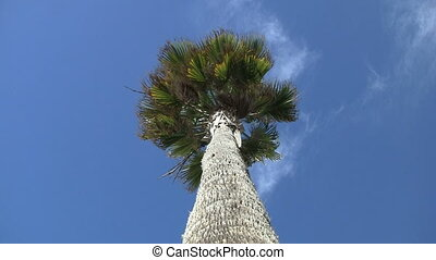 Palm Tree POV