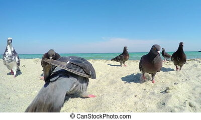 Pigeons on the Sandy Beach - A Flock of Pigeons Flew at the...