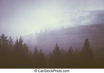 Morning fog on the mountain hills - Autumn landscape with...