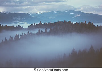 Winter landscape with fog - Winter landscape with morning...