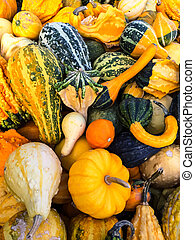 Variety of colorful gourds