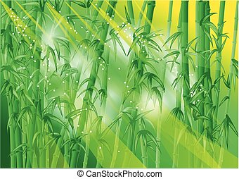 bamboo forest with rays of sun