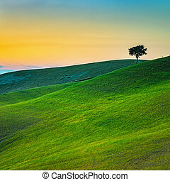 Tuscany, lonely tree and green fields on sunset. Volterra,...