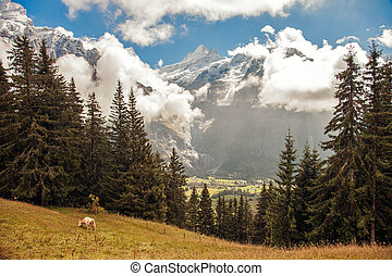 Mountain peaks, streams and meadows in Grindelwald,...